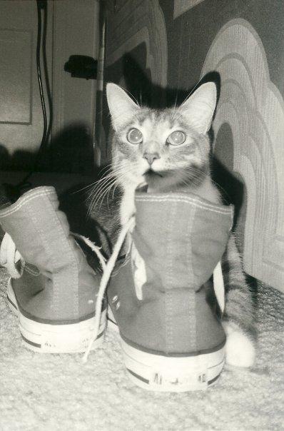 Bryan's Cat, Kurt.