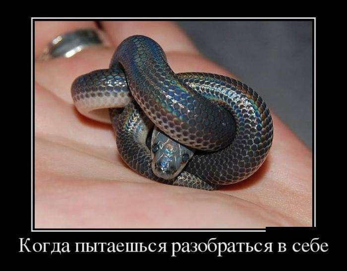 Демотиваторы на 13.01.2016г (30 фото)