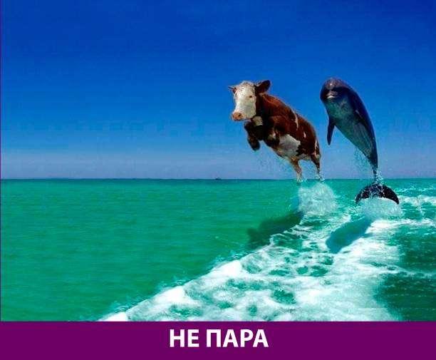 Приколняшка 551 #юмор #приколы #смешные картинки