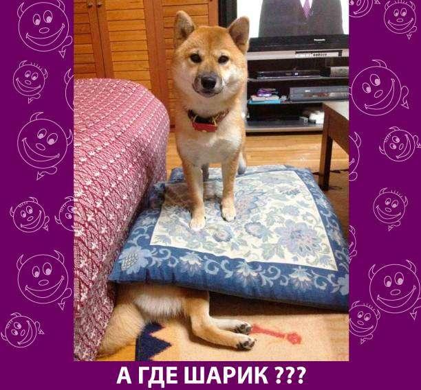 Приколняшка 552 #юмор #приколы #смешные картинки