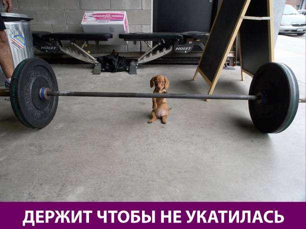 Приколняшка 557 #юмор #приколы #смешные картинки
