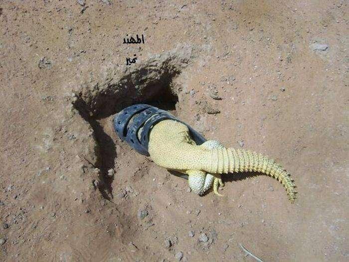Охота на ящерок (15 фото)
