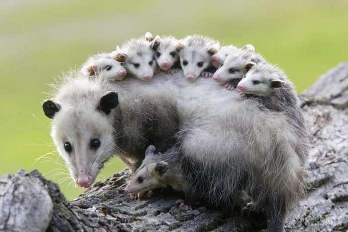 Топ 7: Самые удивительные защитные механизмы у некоторых животных