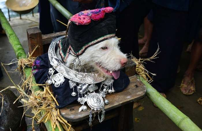Фестиваль поклонения собакам в Китае