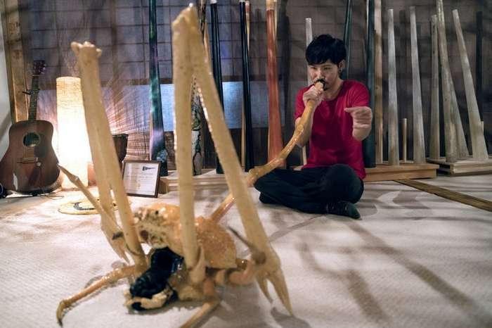 Безумный японец делает музыкальные инструменты из гигантских крабов-пауков-6 фото + 2 видео-