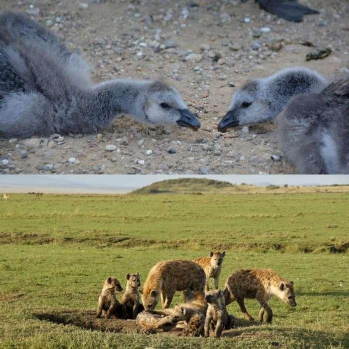 Животные, которые живут безумно тяжелой жизнью: для людей, которые любят пожаловаться на свою жизнь