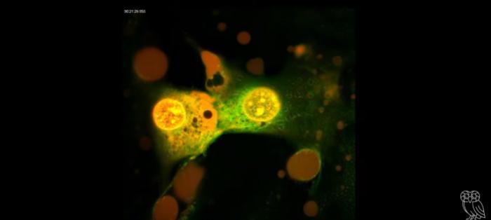 Технология, убивающая рак за 3 минуты, прошла успешные испытания -3 фото-