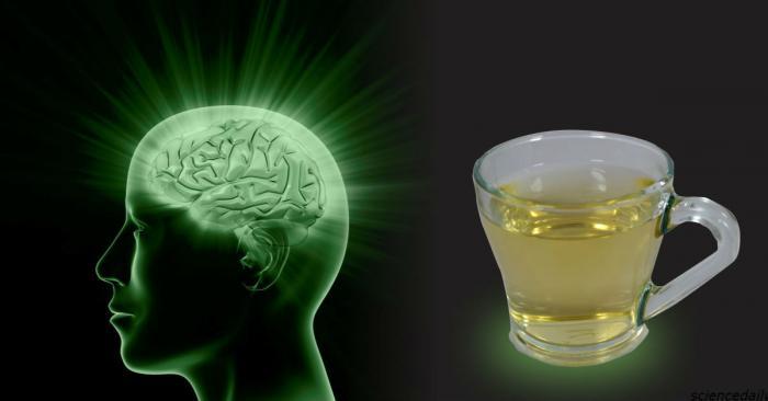 Как употребление чая влияет на мозг человека