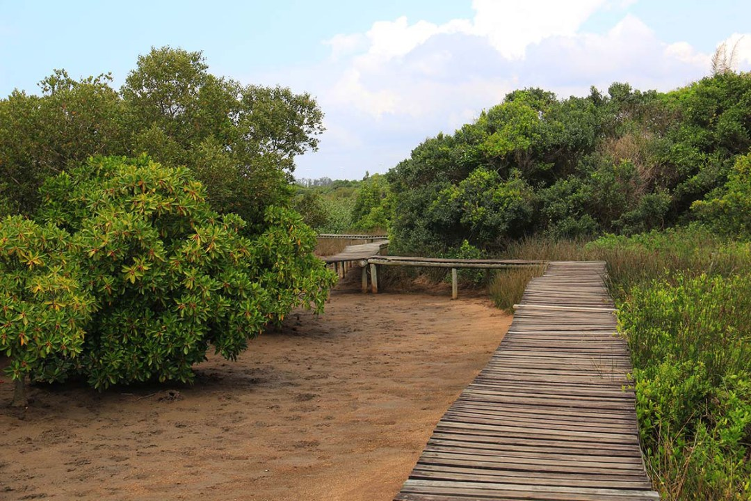 Boardwalk, Beachwood Mangroves