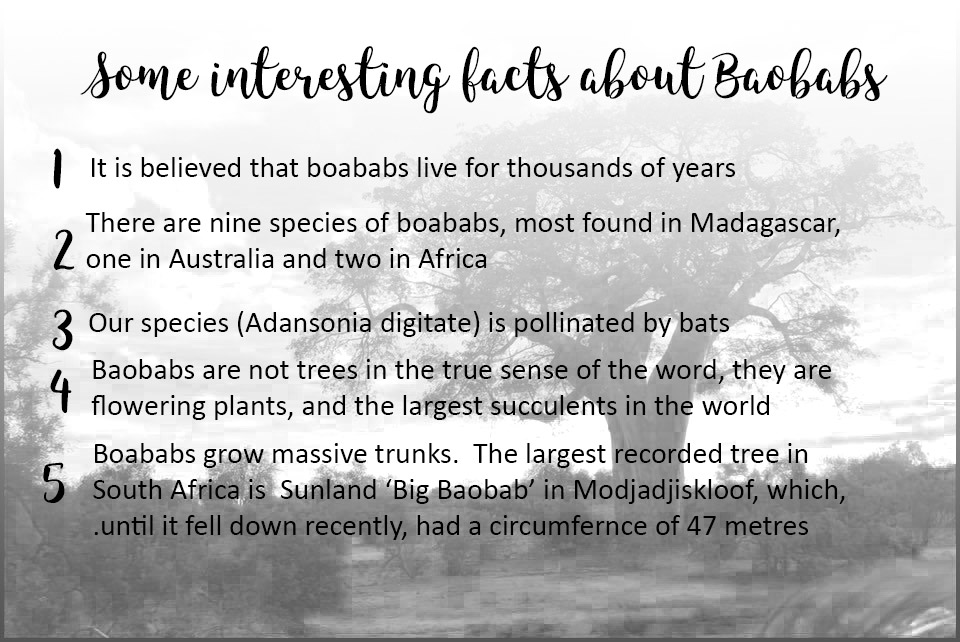 Some Facts about Boababs