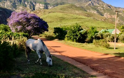 Why Everyone Loves Greyton
