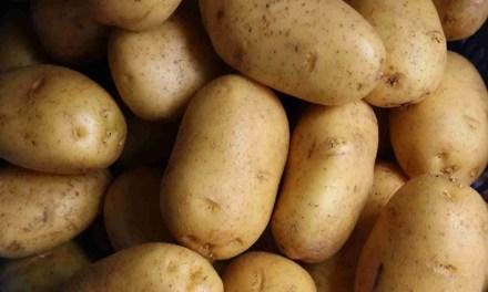 Mustard Potato Salad  – A Family Favorite