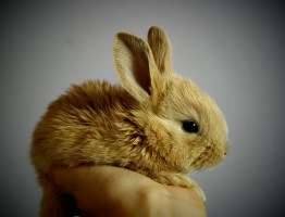 """Weird good luck rituals include repeating the words """"rabbit, rabbit, rabbit"""", """"white rabbit"""" or any variation out loud upon waking on the first morning of a new month will ensure good luck for the rest of the month."""