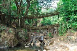 Root Bridges Cool links for June 2, 2018