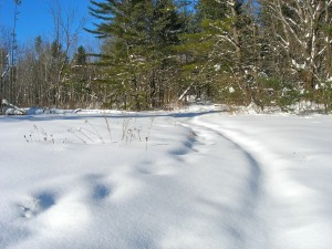 snowy field cross country skiing in Vermont Studios Center up at Johnson State College February 2011
