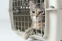 Spay-Neuter-cat