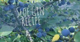 sloes, sloe gin, how to make sloe gin