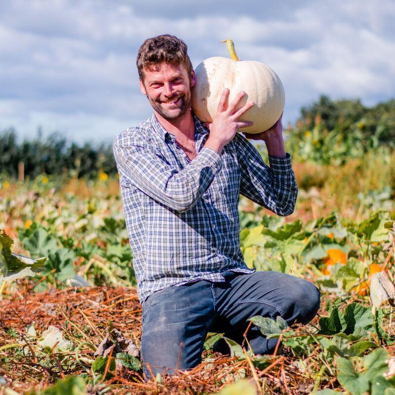 warrington pumpkin patch, warrington pumpkin picking, pyo pumpkins warrington, kenyon hall farm pumpkin patch