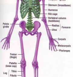 pin by jayme orn on classically catholic memory delta year pinterest skeletal system anatomy and physiology and anatomy [ 702 x 1278 Pixel ]