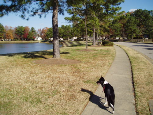 Then neighborhood features sidewalks and wide streets - great for walking your dog.