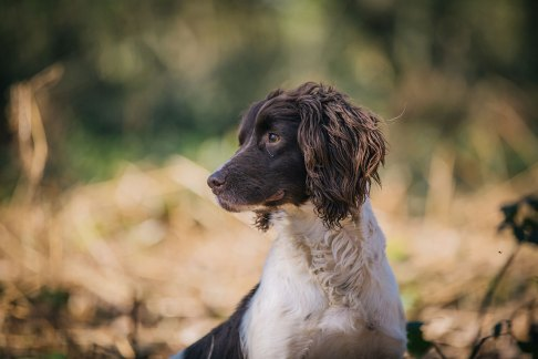 CheshireGundogs-121