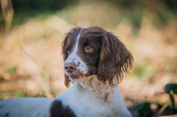 CheshireGundogs-143