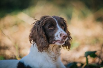 CheshireGundogs-145