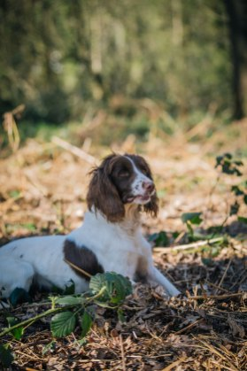 CheshireGundogs-146