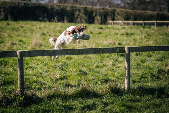 CheshireGundogs-152