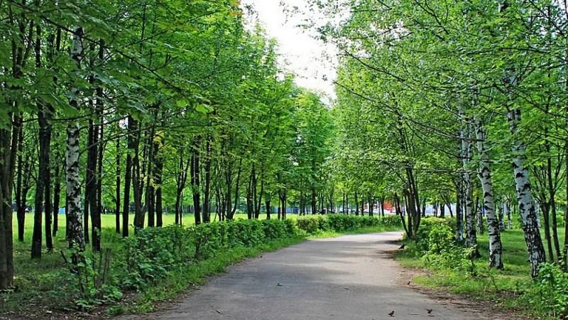 В парке «Добросельский» при реконструкции вырубят 68 деревьев