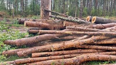 11 гектаров Филипповского леса приватизировали и рубят под застройку