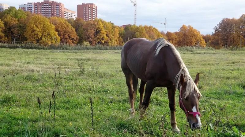 Из зеленого щита Владимира исключили городские парки