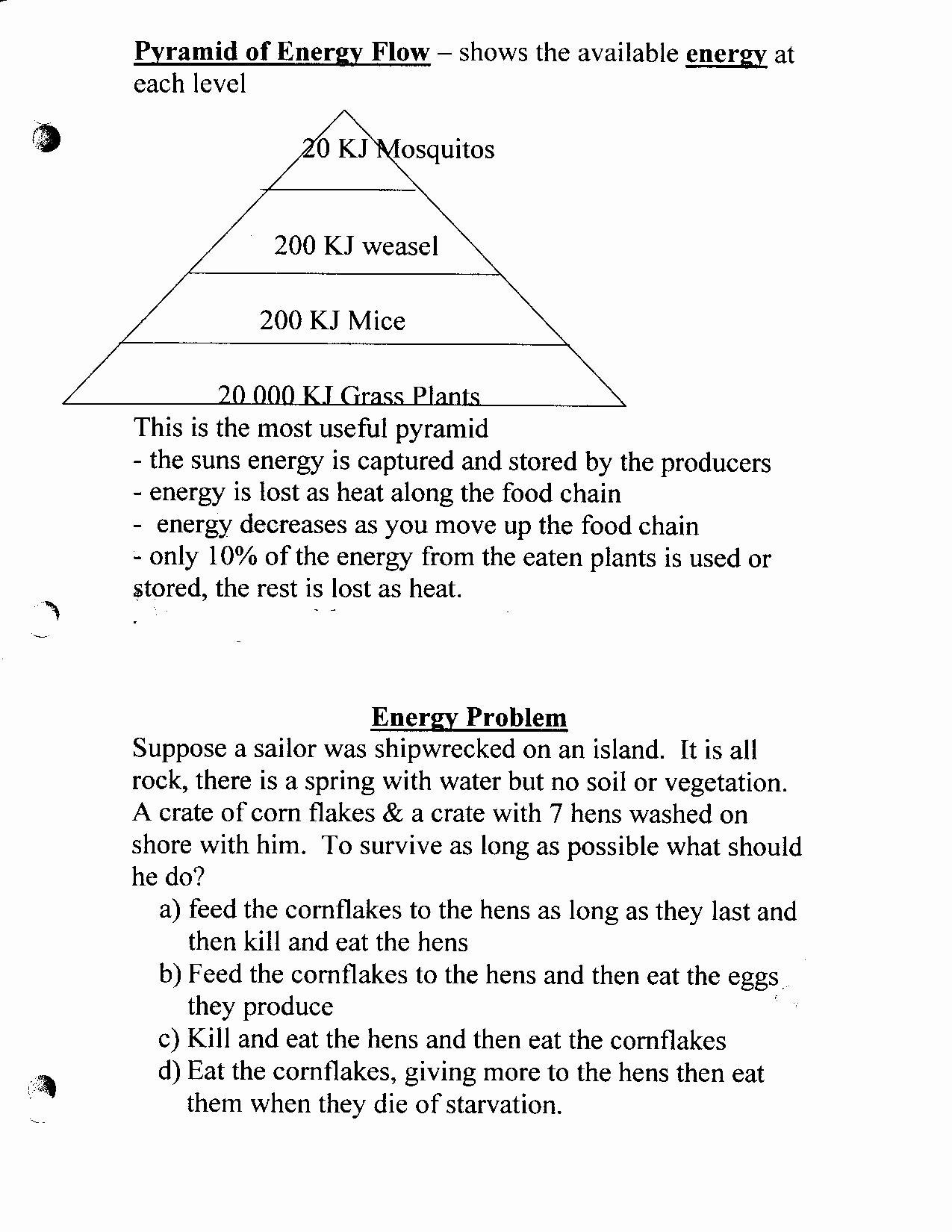 45 Bill Nye Plants Worksheet