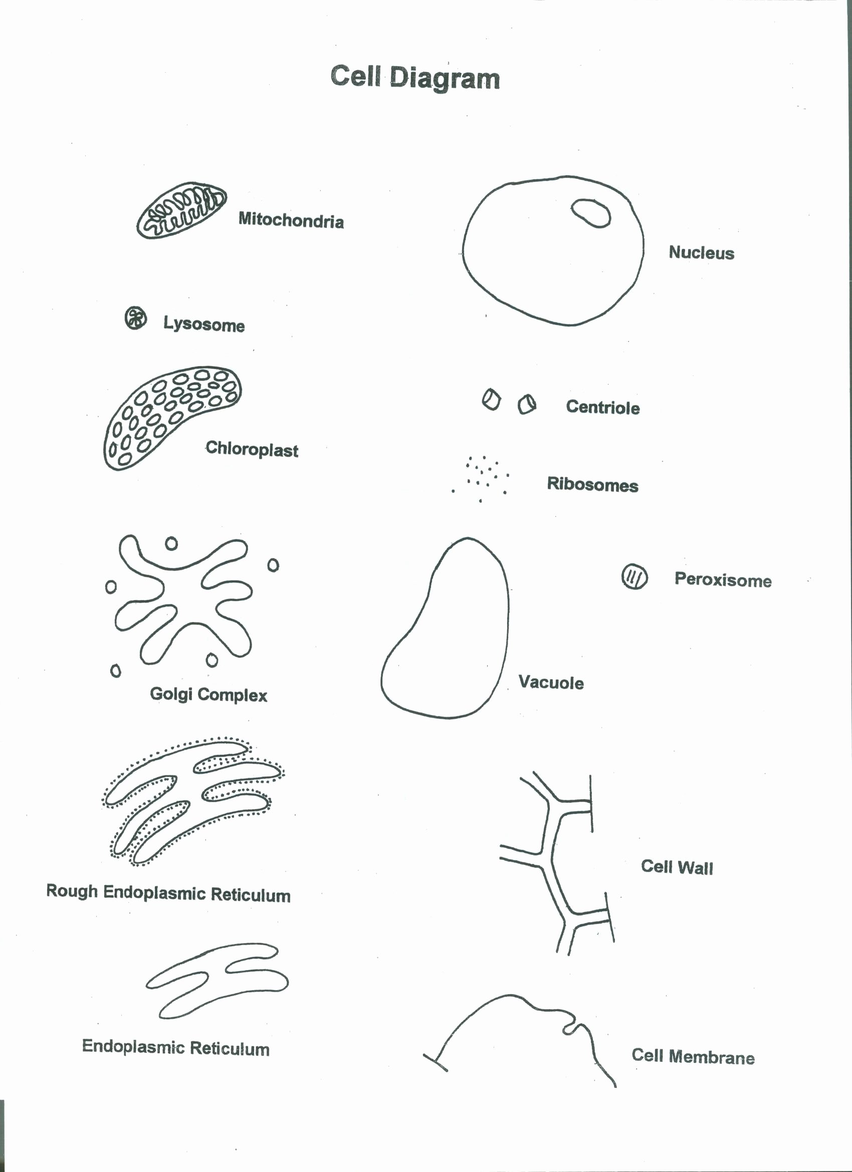 50 Cells Alive Cell Cycle Worksheet