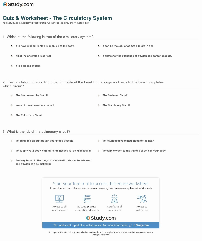 50 Circulatory System Worksheet