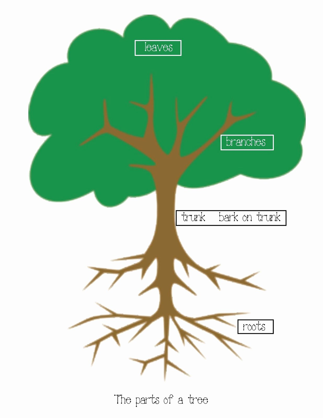 50 Parts Of A Tree Worksheet
