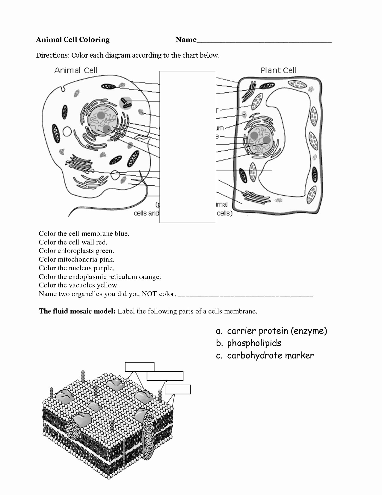 50 Plant Reproduction Worksheet Answers