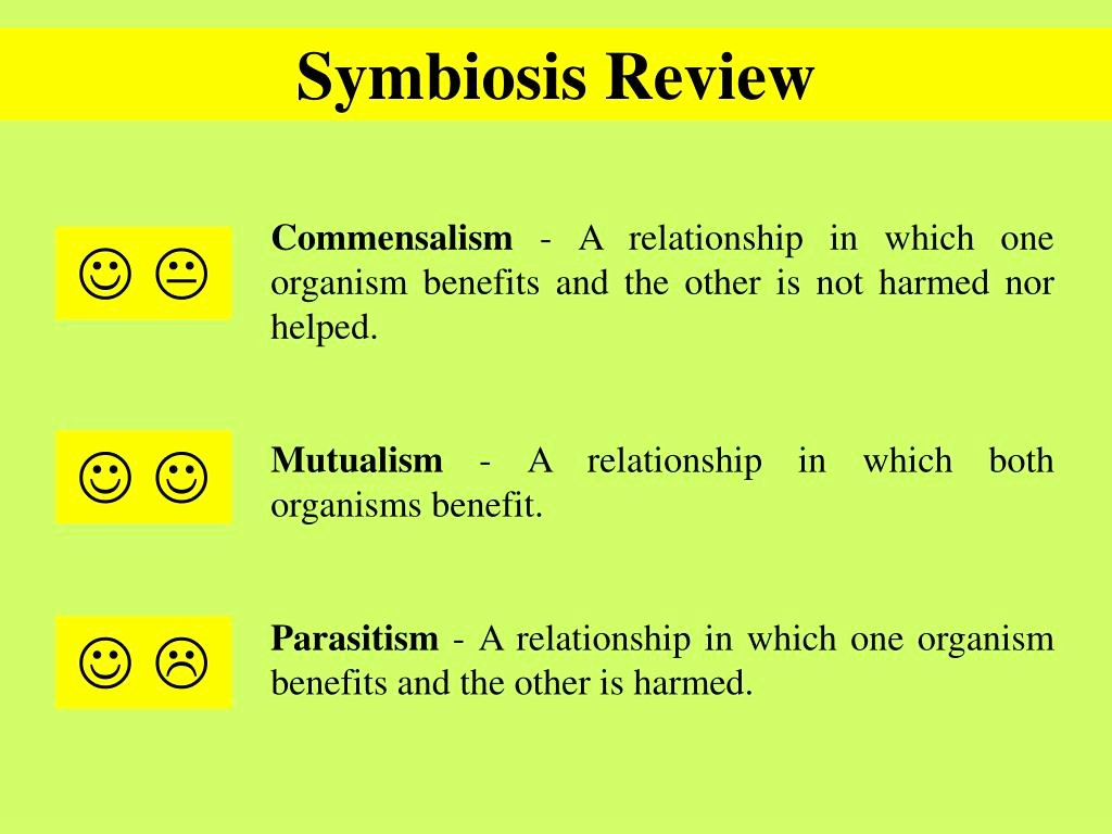 50 Symbiotic Relationships Worksheet Good Bud S