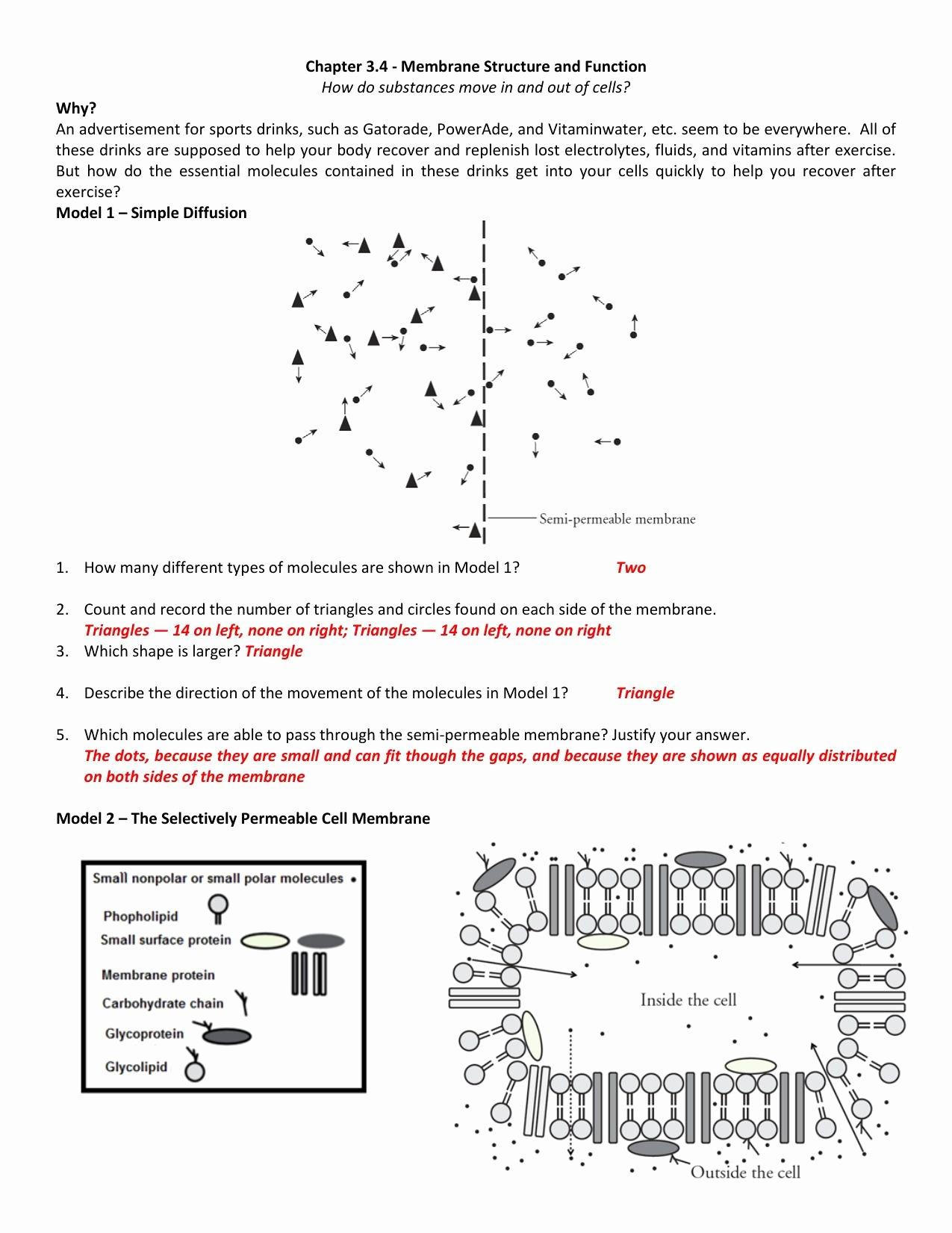 50 Transport In Cells Worksheet