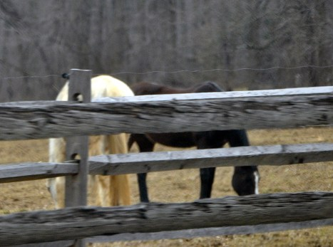 Happy horses grazing somewhere in Chester County