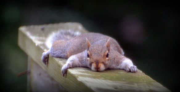 Poor squirrel is utterly worn out from the 2016 election season....