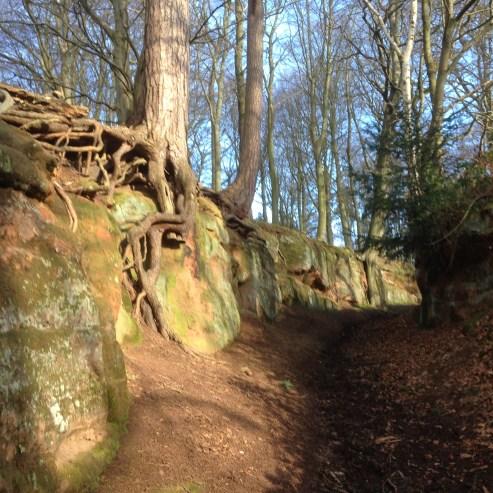 Robin Hood Way, Welbeck