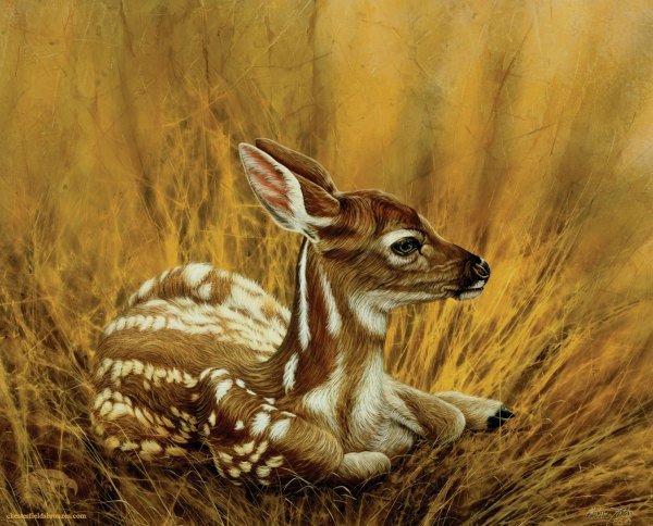 Deer Wildlife Art Paintings