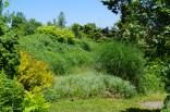 june-18th-tangled-garden-imgp2413