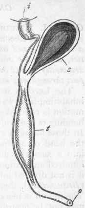 Anarthropoda. Continued