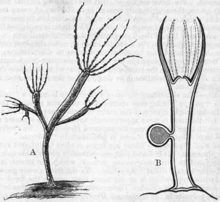 Class I. Hydrozoa