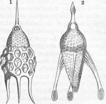 Protozoa. Part 4