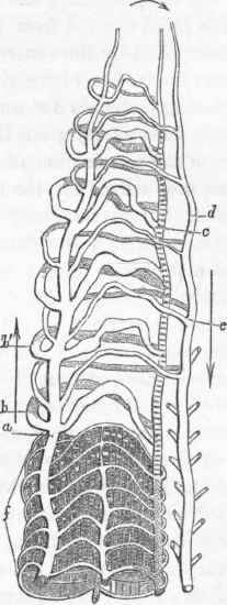 Annelida. Part 9
