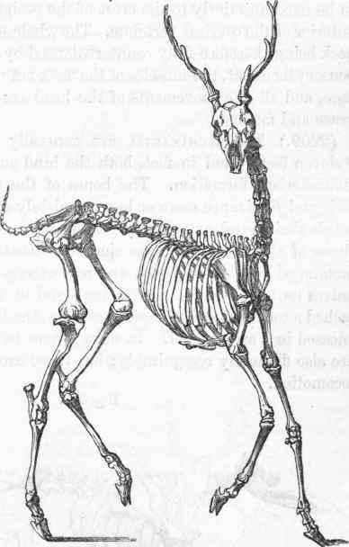 Mammalia. Part 7