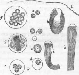 Protozoa. Part 11